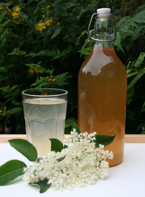 Elderflower cordial » Thrifty Living