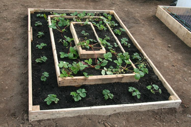 How To Build A Strawberry Bed