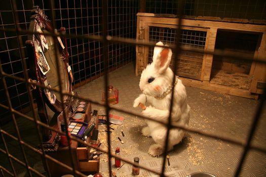 Banksy - rabbit testing cosmetics