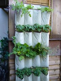 vertical vegetable system