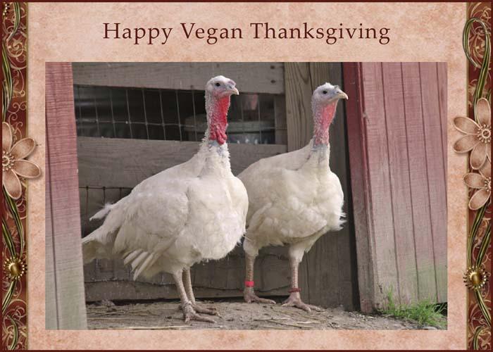 Thanksgiving Comics I Didn't Create – Happy Thanksgiving ... |Happy Vegetarian Thanksgiving Day